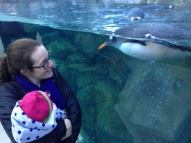 Me and my daughter admiring a penguin at the Calgary Zoo.